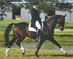 Lehnsritter, Elite Hanoverian Stallion